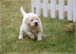 Puppies5-10.jpg
