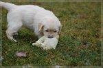 Puppies5-9.jpg