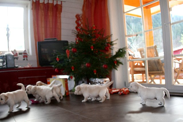 Christmas1_640x426.jpg