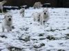 g-snow2_800x533