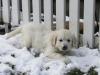 g-snow9_800x533_0