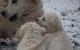 L Wurf im Schnee mit Mama