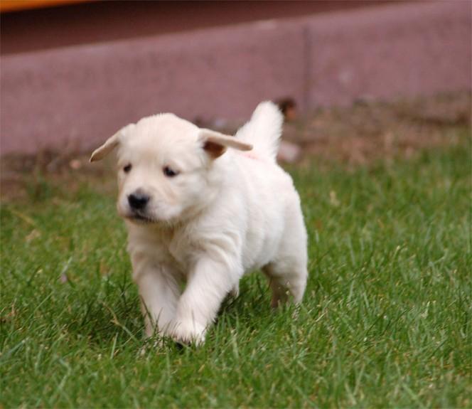 pupies32days.jpg