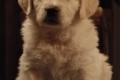 Standbilder Welpen 44 Tage - Puppies 44 days