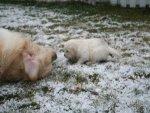Puppies5-13.jpg