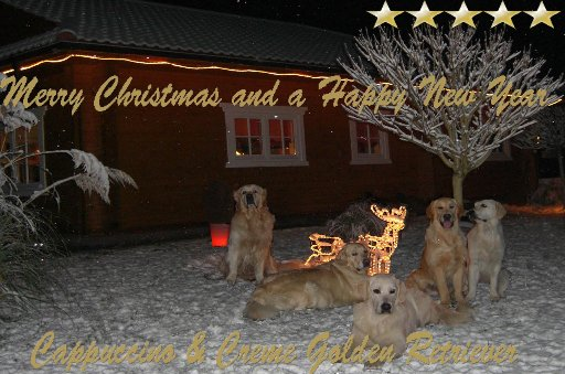 weihnachten2008_512x339