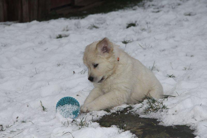 g-snow-19_800x533