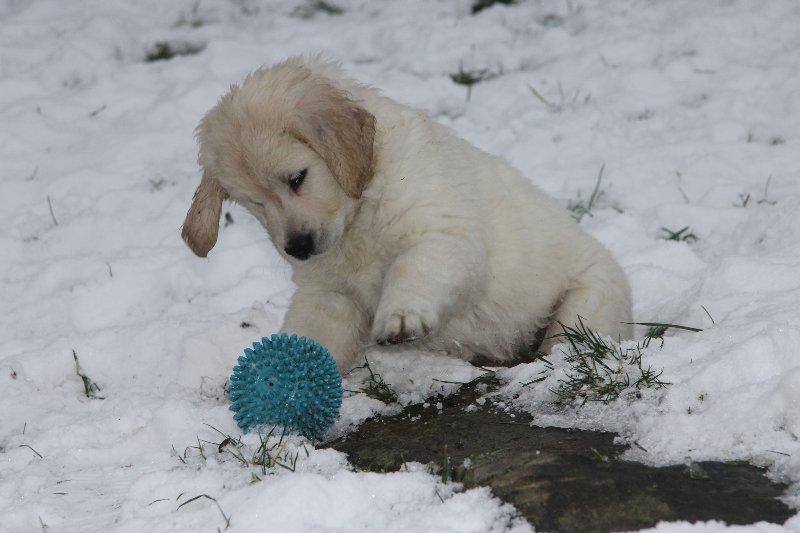 g-snow13_800x533