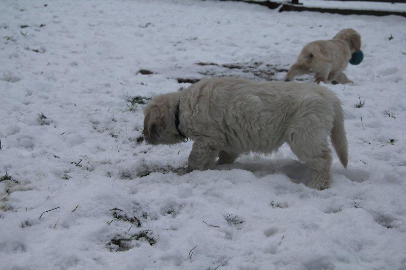 g-snow22_800x533