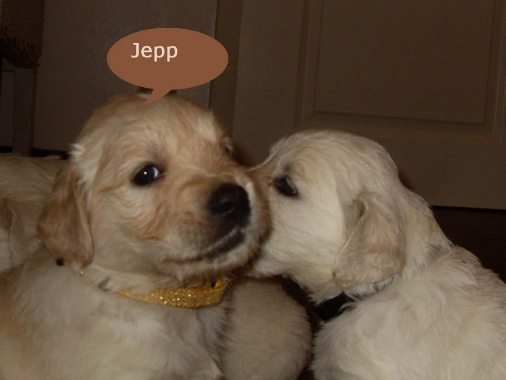 Puppies 42 Tage alt