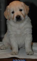 dogbluehead40d.jpg