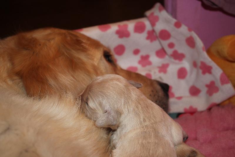 M Wurf 1 Woche kuscheln mit Mama