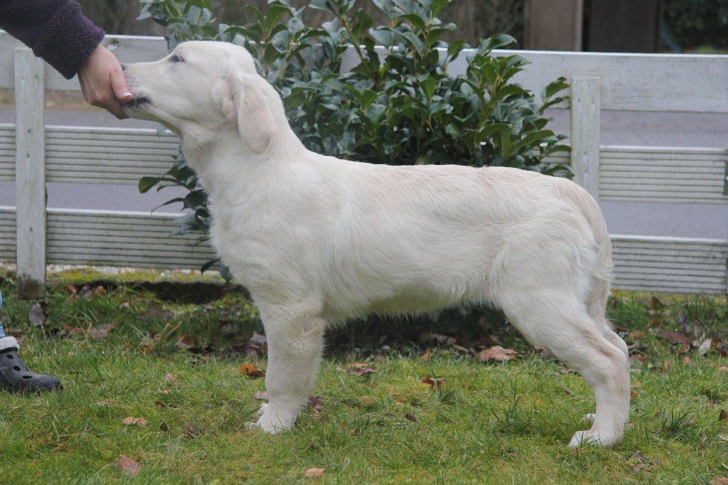 Lola 15 Wochen
