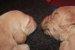 P Wurf 2 Wochen Pink und Lila