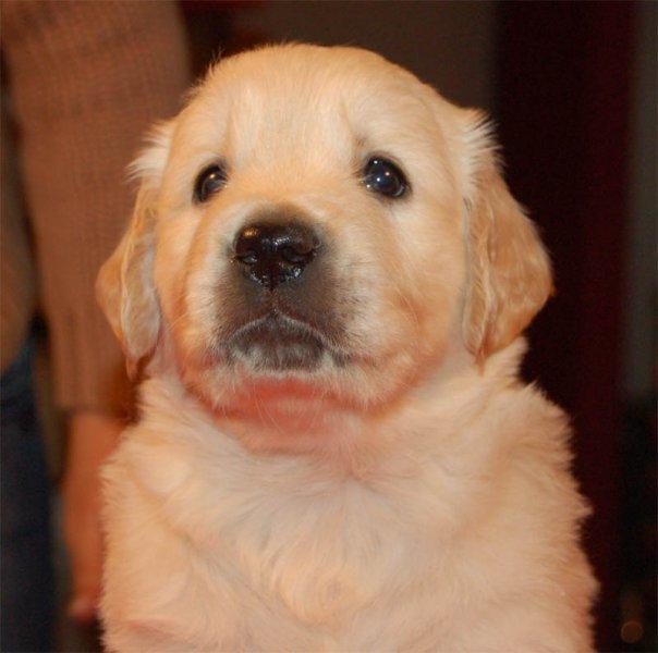 dogblueHead