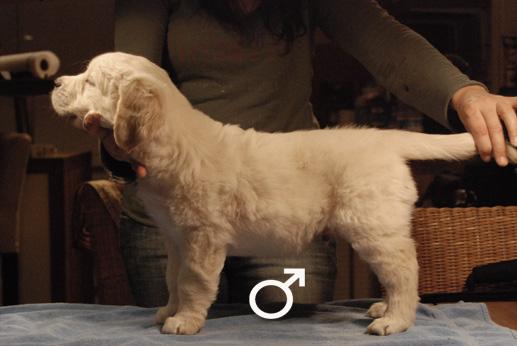 dogwhite1.jpg