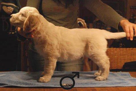 dogblack45.jpg